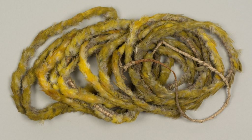 The Hunterian GLAHM E.427. Colour photo showing a Kafa palua belt, an item of chiefly regalia from mid-19th century Niue. A central core of plaited coconut-fibre cordage is wrapped with plain white hiapo barkcloth and tied with feathers from the undertail of the kulukulu, the purple-capped dove (Ptilinopus porphyraceus porphyraceus). (copyright The Hunterian, University of Glasgow)